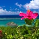 沖縄ブログセミナー&キックオフメンバー募集開始です!